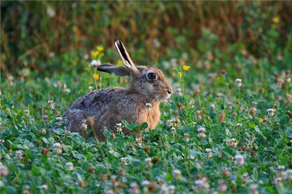 属兔的父母生鼠宝宝好吗