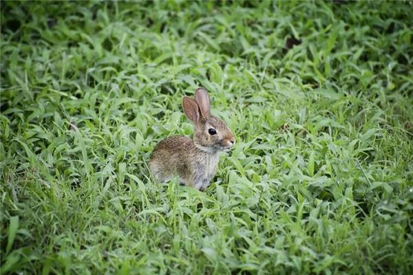 属兔男爱你床上表现