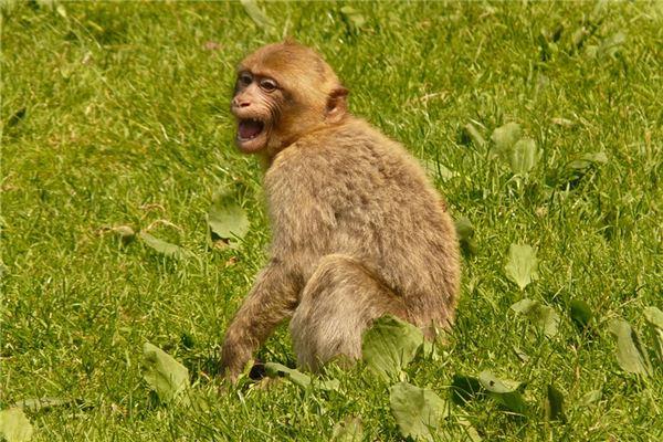 猴年出生好吗