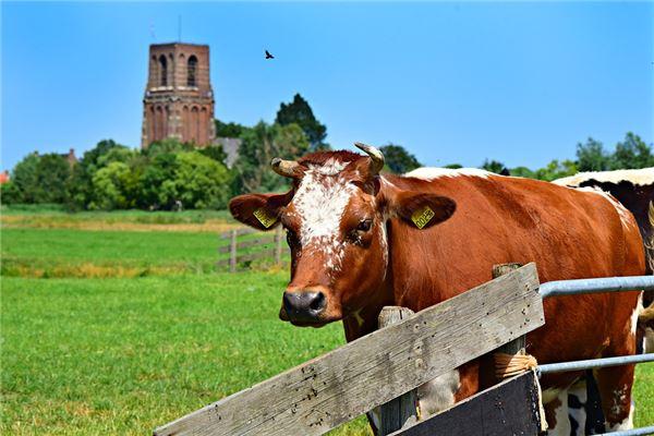 属牛的婚姻配对表