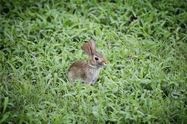 属兔属相婚配表