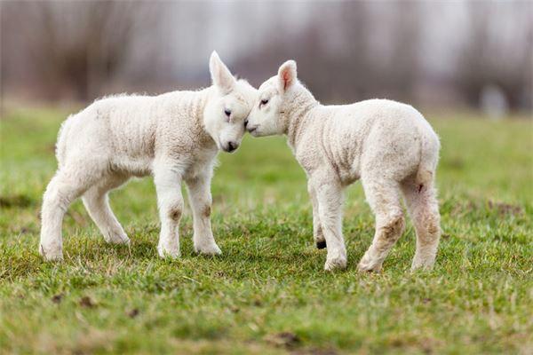 90后属羊的今年多大
