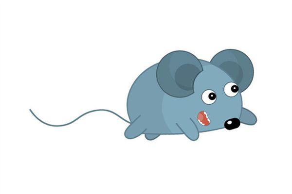 84年属鼠的人2020年财运