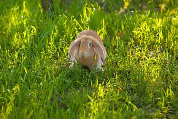 87年兔子2020年运势