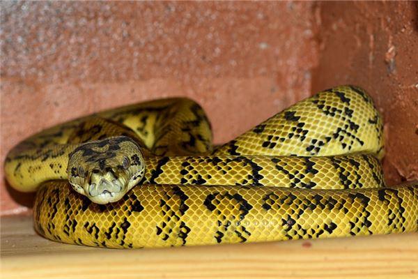 屬蛇的年齡表格