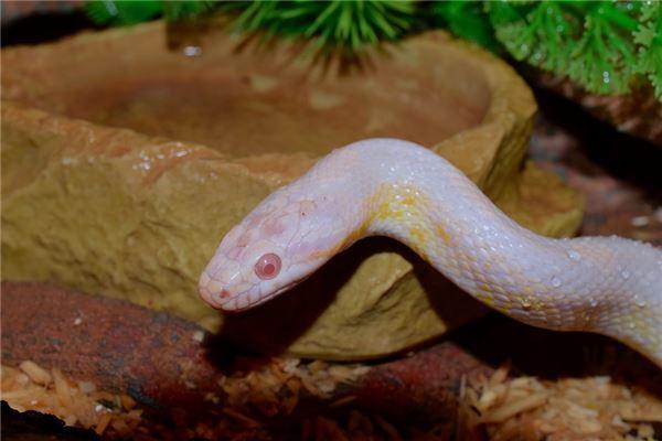屬蛇的年份及年齡表格