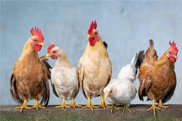 生肖屬雞是哪一年的