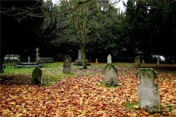 坟前栽树正确位置图片