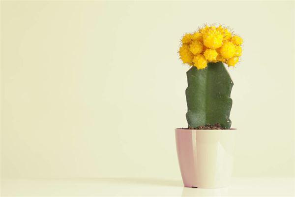 什么花適合放在臥室