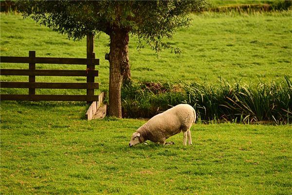 1991年男屬羊的運程