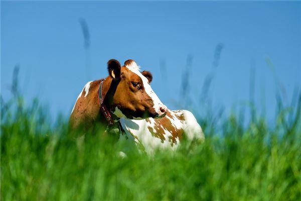 属牛的和什么属相最配旺财
