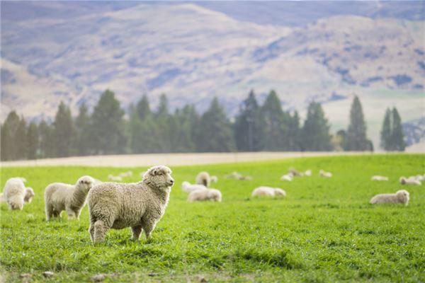 1991年羊什么时辰能发财
