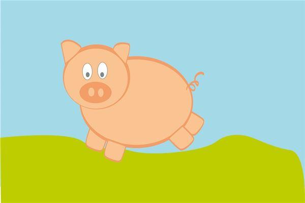 1995什么时辰出生属猪人财运好