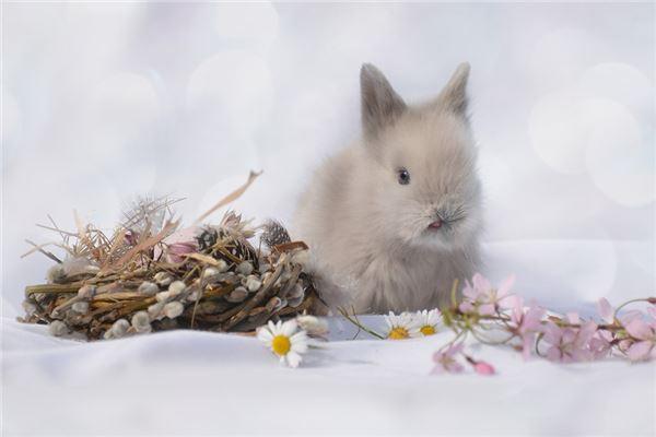 1999年的属兔人什么时辰出生运势好