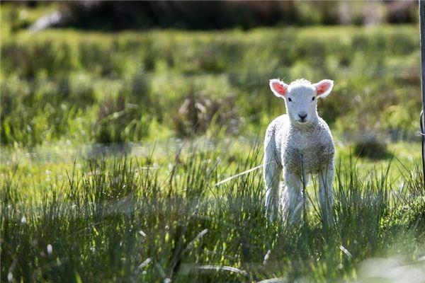 羊年男生的性格脾气
