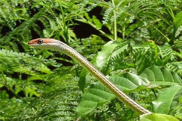 属蛇天蝎男的性格特征