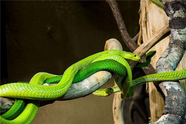 属蛇人性格