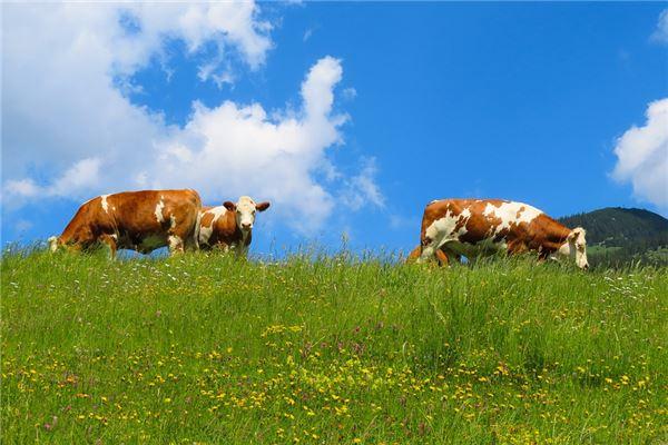 73年出生属牛的最合适的生肖