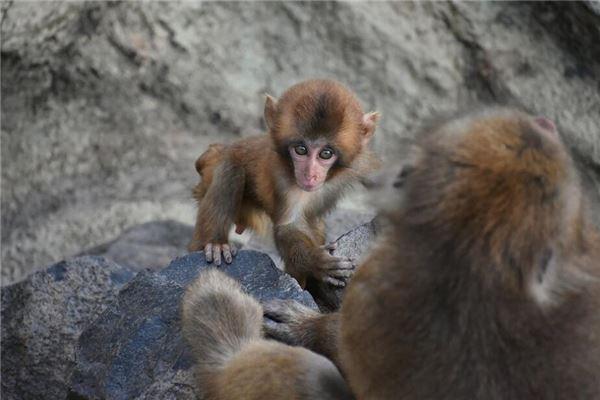 属猴男的性格脾气及爱情