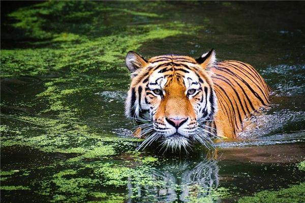 1962年属虎的几点出生的好