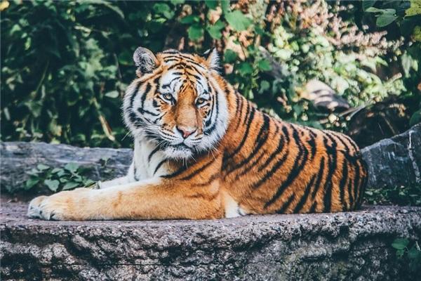 1998年属虎的人桃花运