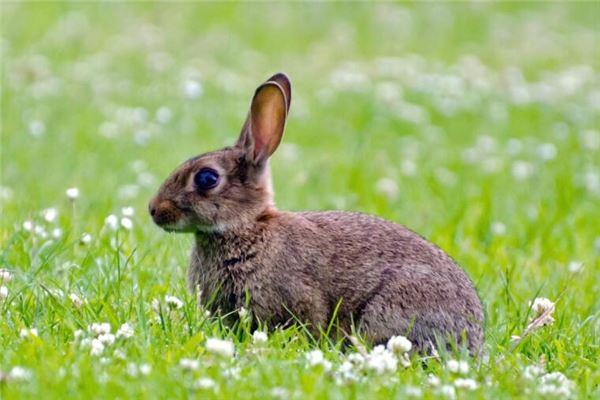 属兔的哪些年份出生