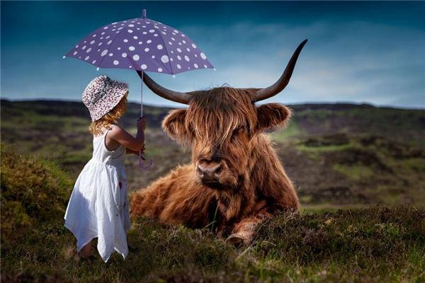 属相牛的性格特质