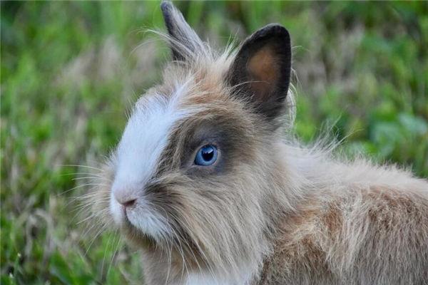2021年生肖属兔的人多大