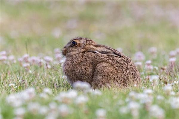 2022年生肖兔的人多大岁数了