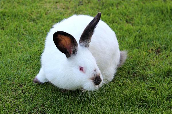 1999年属兔的人情感如何