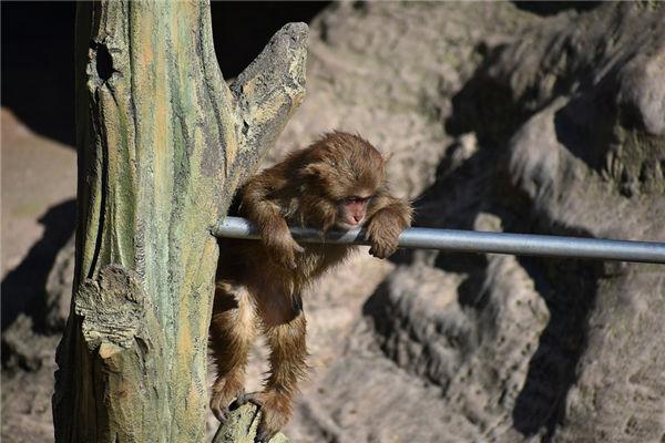 生肖属猴的女人性格特点