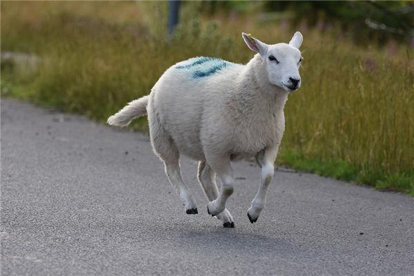 1991年9月属羊的姻缘如何