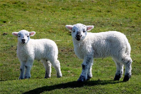 2015年8月属羊的性格为人
