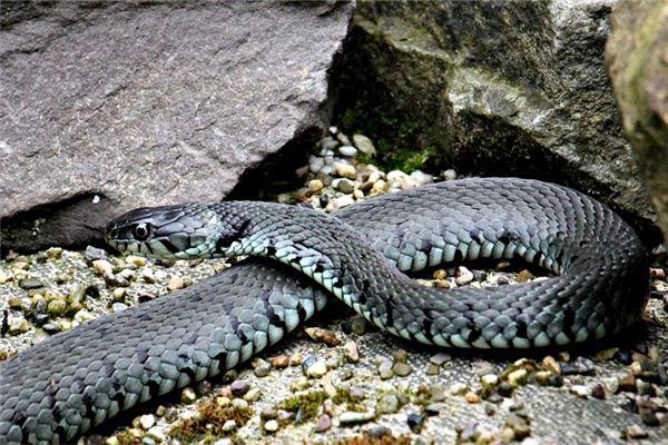 属蛇的人性格好坏呢