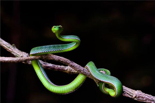 属蛇的女性情感中有何特点