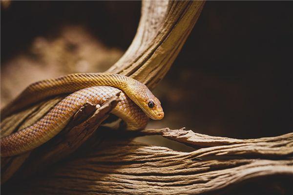 生肖属蛇女性性格运势