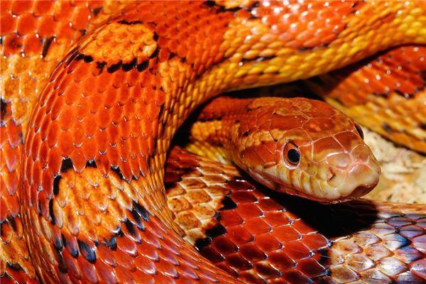 属蛇的男人喜欢你有何表现