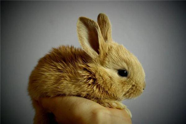 属兔男人喜欢你的表现